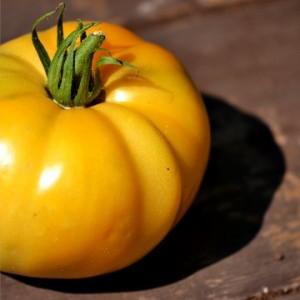Tomate jaune style coeur de boeuf